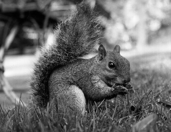 リス「A Squirrel」:写真・画像(18)[壁紙.com]