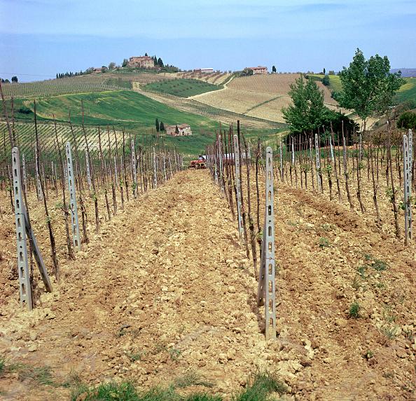 San Gimignano「Cultivating vines in Tuscany」:写真・画像(9)[壁紙.com]