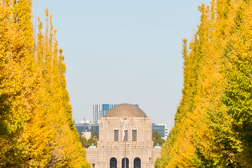 Meiji Jingu Gaien「Rows of autumn leaves ginkgo trees surround the Ginkgo Tree Avenue and Meiji Memorial Picture Gallery (Meiji Jingu Seitoku Kinen Kaigakan) behind in Jingu Gaien, Chhiyoda Ward, Tokyo Japan on November 17 2017.」:スマホ壁紙(9)