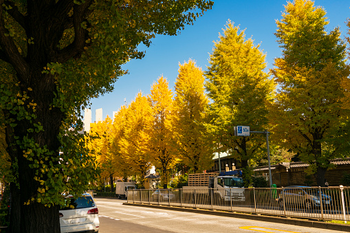 Treelined「Rows of autumn leaves Ginkgo trees stand along both side of the street at Ochanomizu, Bunkyo Ward Tokyo Japan on November 25 2017.」:スマホ壁紙(7)