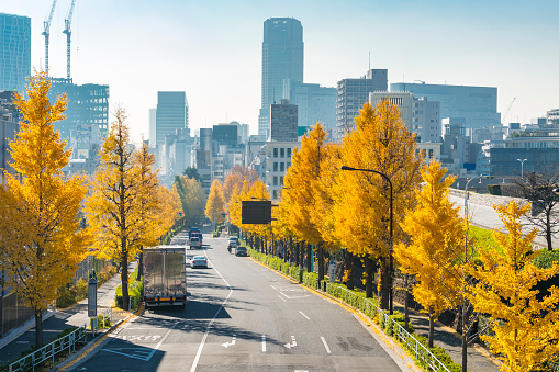 Treelined「Rows of autumn leaves ginkgo trees stand along both side of the Street and surround the traffic at Harajuku Jingumae Shibuya Tokyo Japan on November 26 2017.」:スマホ壁紙(15)