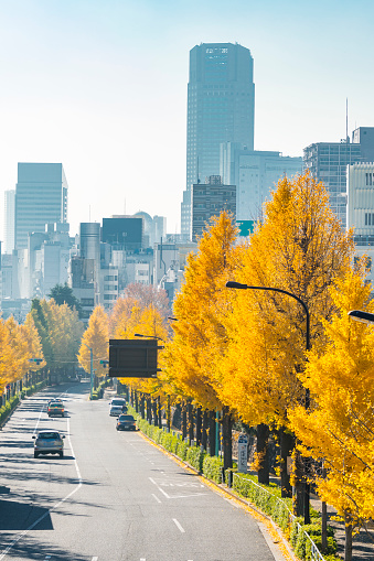 Treelined「Rows of autumn leaves ginkgo trees stand along both side of the Street and surround the traffic at Harajuku Jingumae Shibuya Tokyo Japan on November 26 2017.」:スマホ壁紙(9)