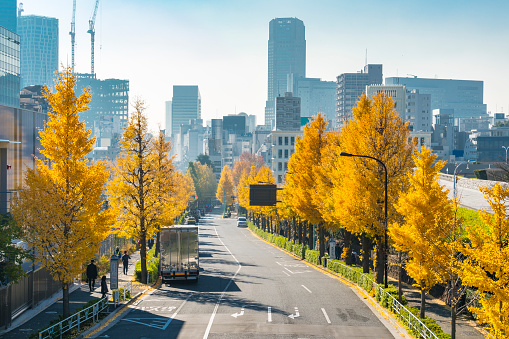Treelined「Rows of autumn leaves ginkgo trees stand along both side of the Street and surround the traffic at Harajuku Jingumae Shibuya Tokyo Japan on November 26 2017.」:スマホ壁紙(11)