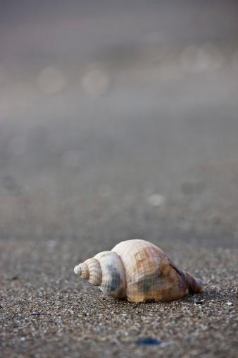 snails「A Conch Shell」:スマホ壁紙(1)