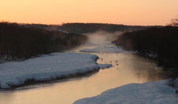 Hokkaido「Endangered Japanese Cranes Inhabit Kushiro Marshland」:写真・画像(3)[壁紙.com]