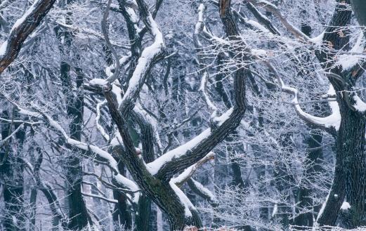 ウィーンの森「verschneiter Wienerwald」:スマホ壁紙(1)