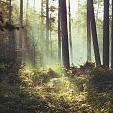 樹林壁紙の画像(壁紙.com)