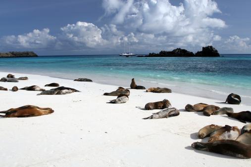 ガラパゴス諸島「ガラパゴスシーライオンビーチでの日光浴やガラパゴス諸島、エクアドル」:スマホ壁紙(18)