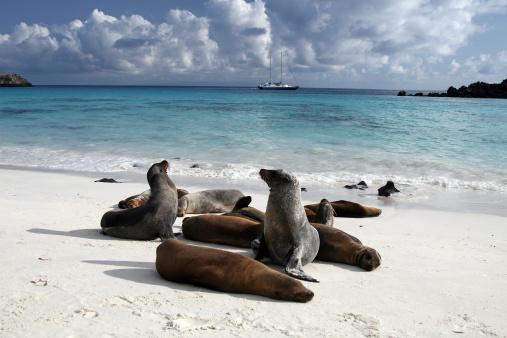 ガラパゴス諸島「ガラパゴスシーライオンビーチでの日光浴やガラパゴス諸島、エクアドル」:スマホ壁紙(13)