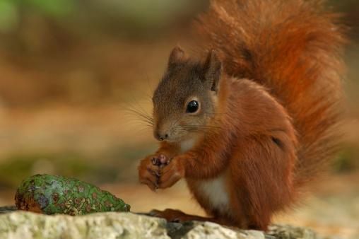 Squirrel「Squirrel 03」:スマホ壁紙(13)