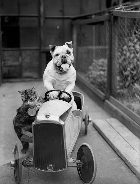 猫「Dog And Cat Car」:写真・画像(19)[壁紙.com]