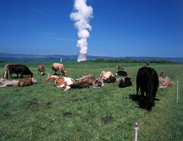 Pasture「Cow farming and the cooling tower of nuclear power plant Leibstadt, Switzerland」:写真・画像(13)[壁紙.com]