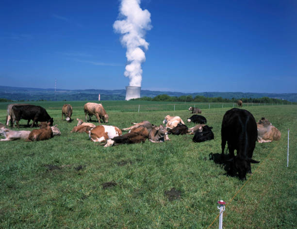 Cow farming and the cooling tower of nuclear power plant Leibstadt, Switzerland:ニュース(壁紙.com)