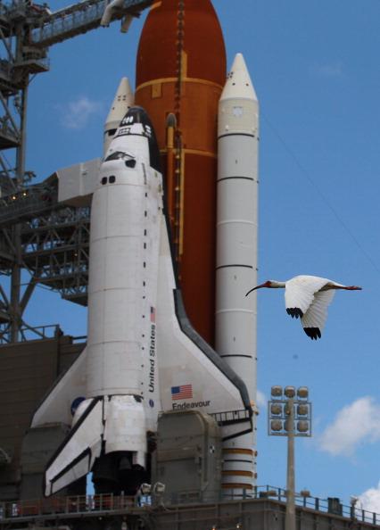 Space Shuttle Endeavor「NASA Prepares For Space Shuttle Endeavour's Launch」:写真・画像(1)[壁紙.com]
