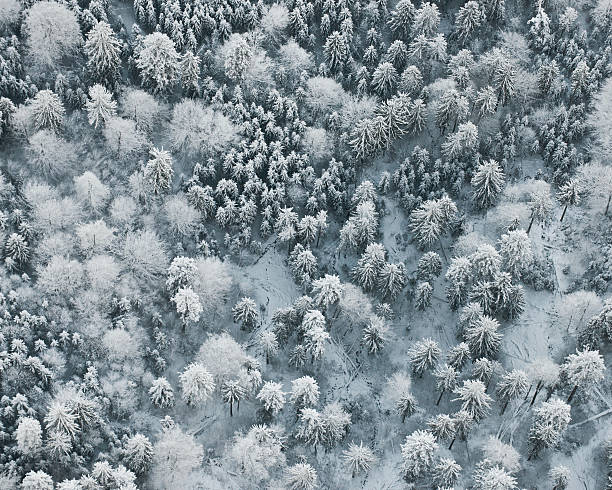 Forest in winter, aerial view:スマホ壁紙(壁紙.com)