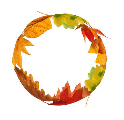 かえでの葉「秋のサークル」:スマホ壁紙(12)