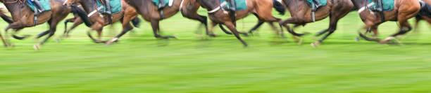 Panorama View of Race Horses:スマホ壁紙(壁紙.com)