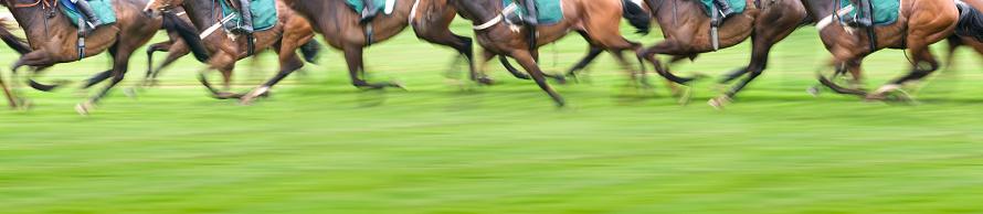 Saddle「Panorama View of Race Horses」:スマホ壁紙(7)