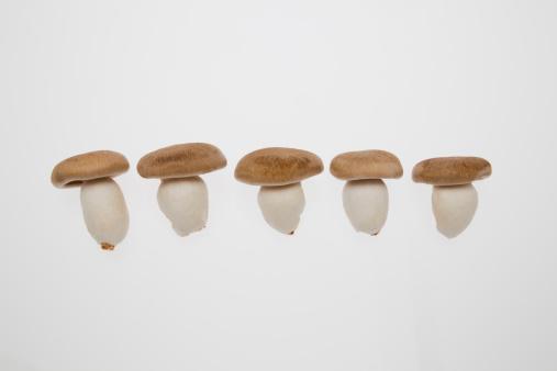 ヒラタケ「Shimeji Mushrooms」:スマホ壁紙(17)