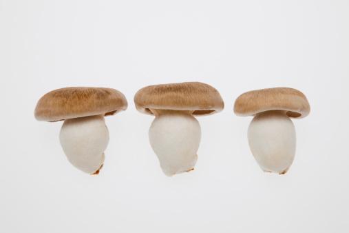 Mushroom「Shimeji Mushrooms」:スマホ壁紙(8)