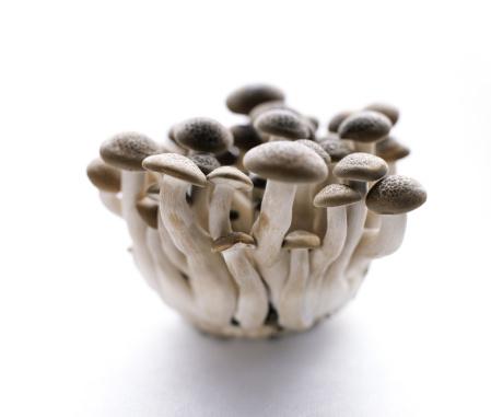 ヒラタケ「Shimeji mushrooms」:スマホ壁紙(7)