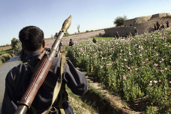 Oriental Poppy「Afghan and US Teams Fight Opium Trade In Helmand Province Of Southern Afghanistan」:写真・画像(5)[壁紙.com]