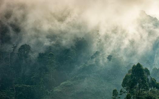 East Africa「Uganda, Bwindi Impenetrable National Park, Bwindi Impenetrable Forest」:スマホ壁紙(19)