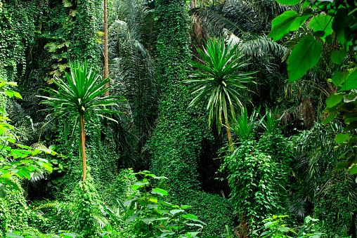 East Africa「Uganda, Bwindi Impenetrable National Park, Bwindi Impenetrable Forest」:スマホ壁紙(7)