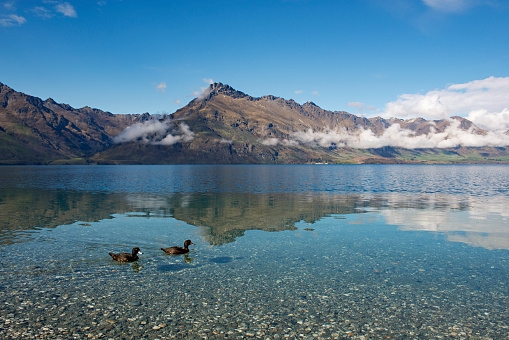 静かな情景「Pair of black ducks on Lake Wakatipu with reflection of Walter Peak.」:スマホ壁紙(4)
