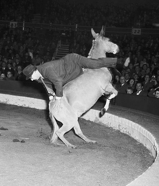 動物「Kossmayer's Unrideable Mule」:写真・画像(13)[壁紙.com]