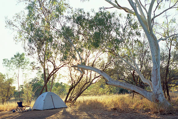 Tent pitched below tree in outback:スマホ壁紙(壁紙.com)