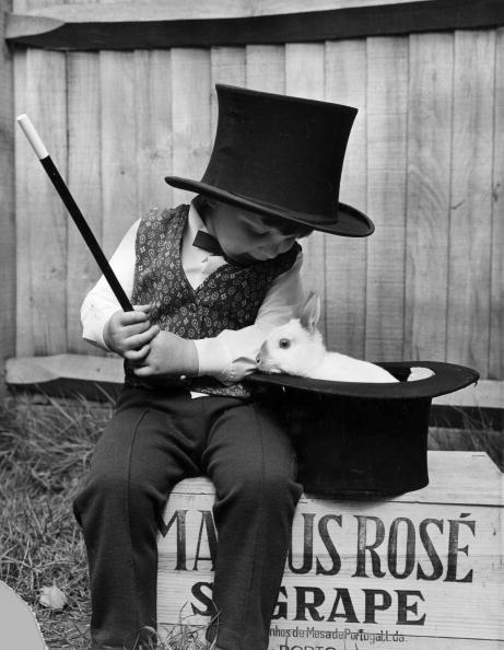 Rabbit - Animal「Young Magician」:写真・画像(15)[壁紙.com]
