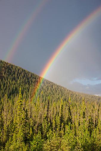 Double Rainbow「Double rainbow over an evergreen forest, Yukon Territory, Canada, Summer」:スマホ壁紙(17)