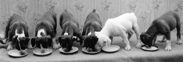 Fred Morley「Greedy Pup」:写真・画像(19)[壁紙.com]