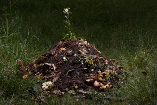 Compost「Flower growing in compost heap」:スマホ壁紙(18)