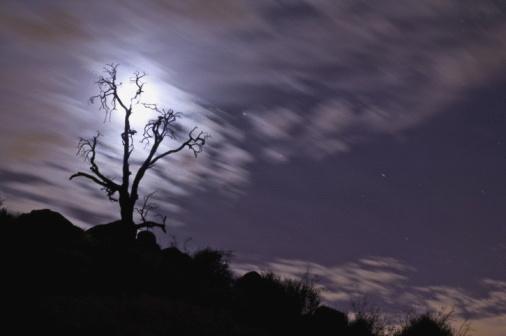 月「Full moon behind bare tree」:スマホ壁紙(5)