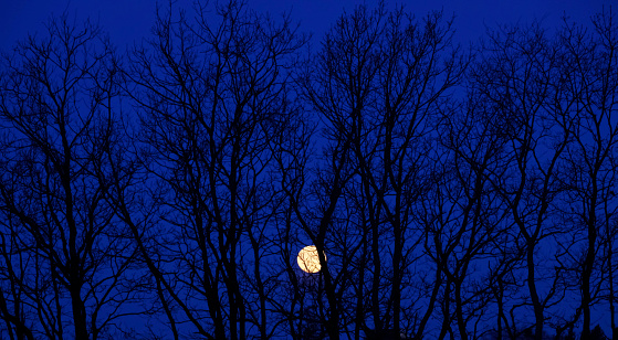 月「Full moon behind branches of a bare tree」:スマホ壁紙(19)