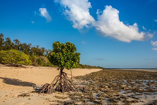 インド洋「Roots of a mangrove exposed in low tide, Quirimba Island, Quirimbas National Park」:スマホ壁紙(13)