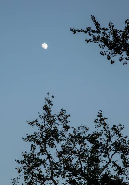 Moon and trees:スマホ壁紙(壁紙.com)