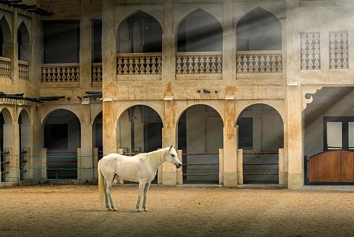 Horse「Horse standing in sunbeams near ornate building」:スマホ壁紙(1)