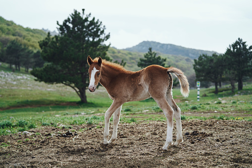 Horse「Horse standing in field」:スマホ壁紙(1)
