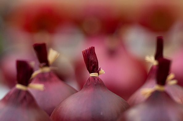 Onion「The Royal Horticultural Society's 2015 Harvest Festival Show」:写真・画像(7)[壁紙.com]