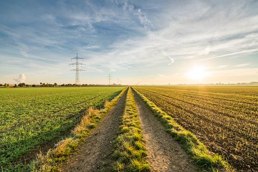 Dirt Road「Path in field at sunrise」:スマホ壁紙(11)
