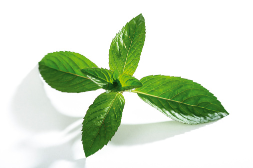 Mint Leaf - Culinary「Mint, mentha spicata」:スマホ壁紙(15)