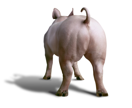 Animal Themes「Pig Standing With Rear End Facing The Camera」:スマホ壁紙(1)