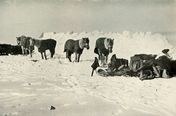Ski Pole「Ponies Behind Their Shelter In Camp On The Barrier」:写真・画像(3)[壁紙.com]