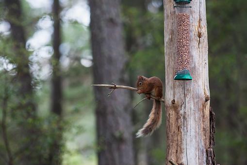 Bird Seed「Squirrel sitting on a tree branch eating seed from a bird feeder」:スマホ壁紙(14)