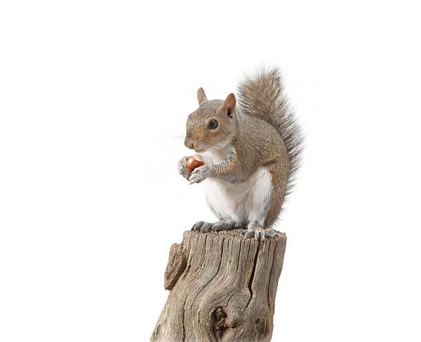 Squirrel sitting on log eating nut:スマホ壁紙(壁紙.com)