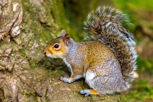 Gray Squirrel「Squirrel sitting at bottom of a tree」:スマホ壁紙(18)
