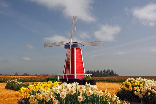水仙「A Windmill And Tulip Fields」:スマホ壁紙(2)